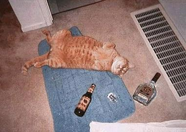 Name:  26%20ANIMAL%20BEER6.jpg