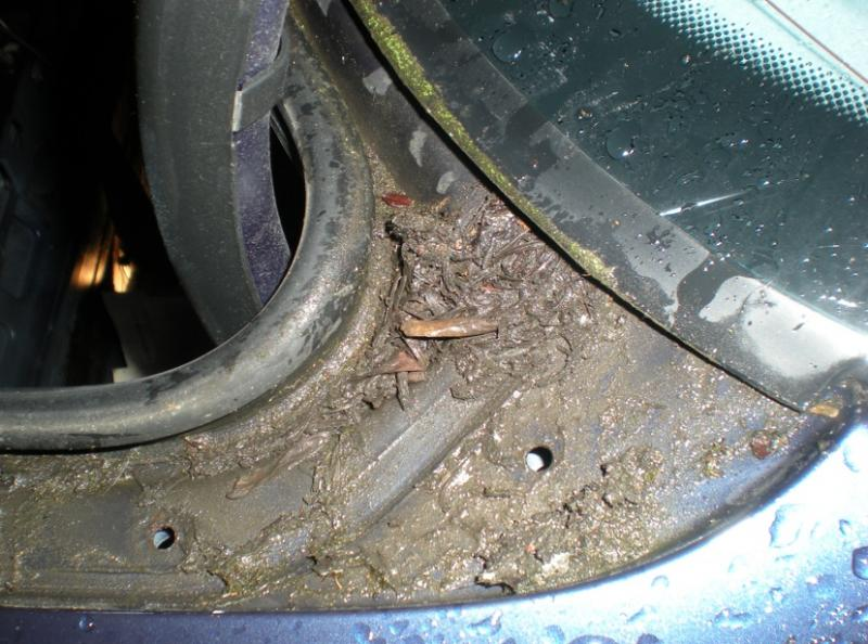 Water In Trunk Boot Help Mercedes Benz Forum