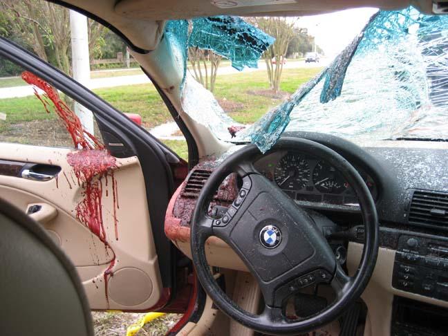 Mercedes Benz Of Tampa >> my Alsa trim.. oh ...and we hit a deer... - Mercedes-Benz Forum