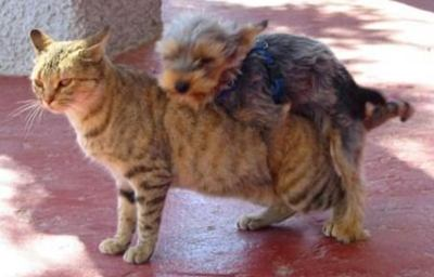 Name:  dog-and-cat.jpg Views: 43 Size:  16.9 KB