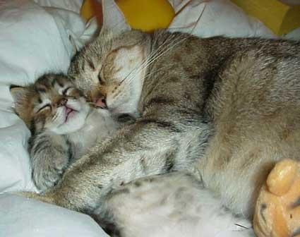 Name:  f-Cat-Snuggle-2503.jpg Views: 76 Size:  18.4 KB