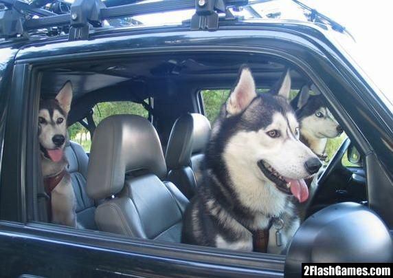I'm better than everyone-f-driving-dogs-3000.jpg