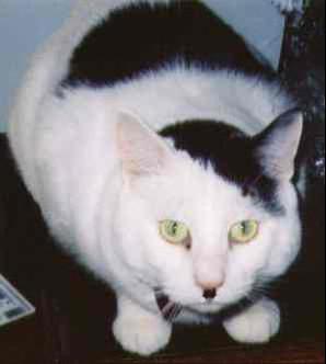 Name:  f-Hitler-Kitty-3222.jpg Views: 100 Size:  9.2 KB