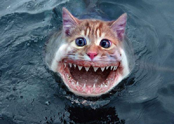 new avatar for jillian-f-shark-cat-3136.jpg