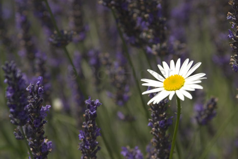 Name:  flower.jpg Views: 35 Size:  54.4 KB